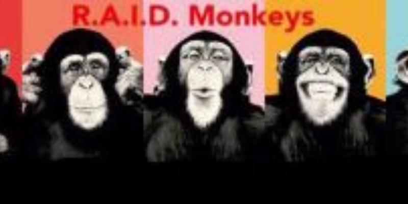 R.A.I.D. Monkeys, groupe de musique Rock en représentation à Vaucluse - photo de couverture n° 1